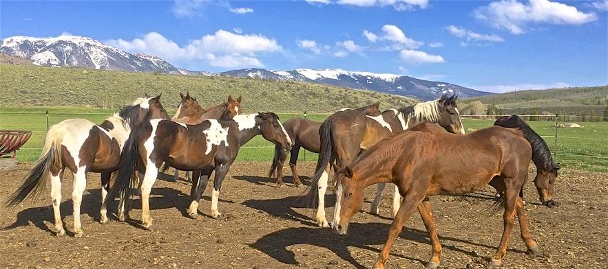 Partners With Rescued Horses